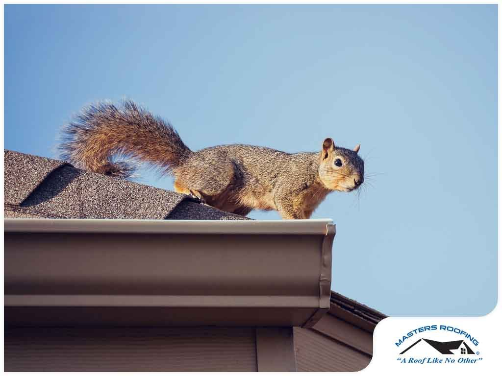 Are There Squirrels on Your Roof and in Your Attic?